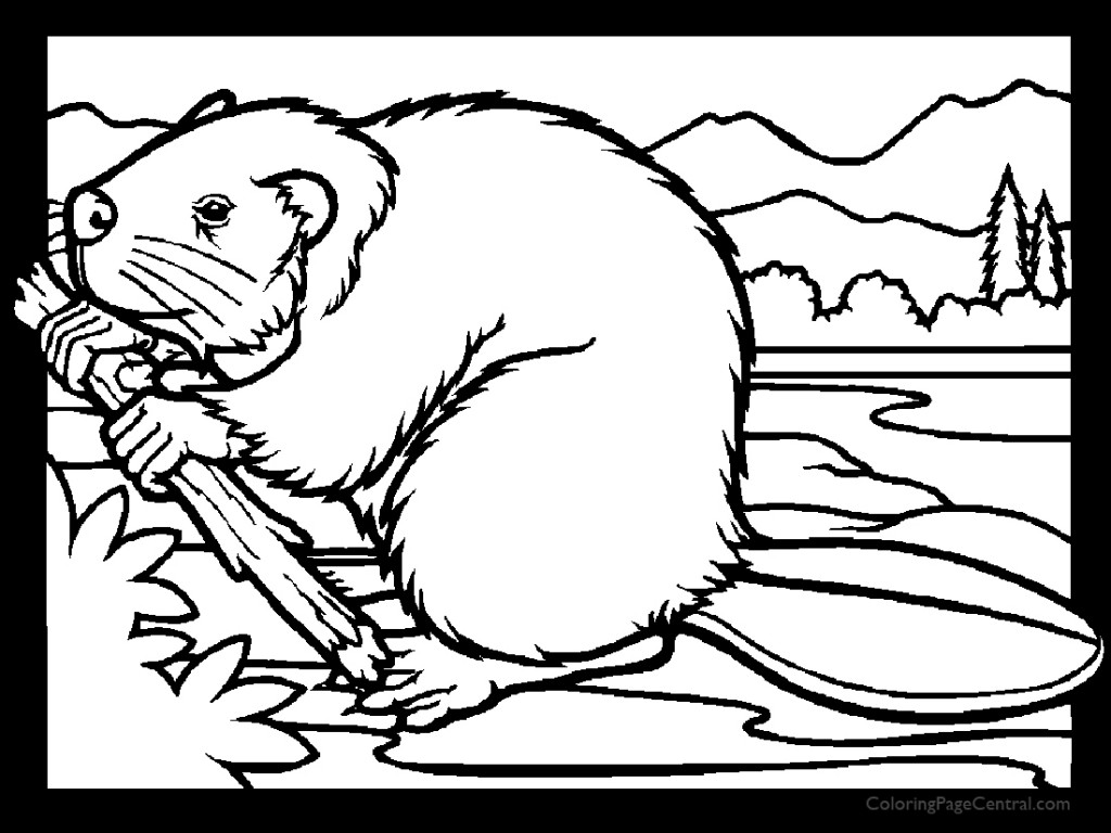 Beaver 01 Coloring Page