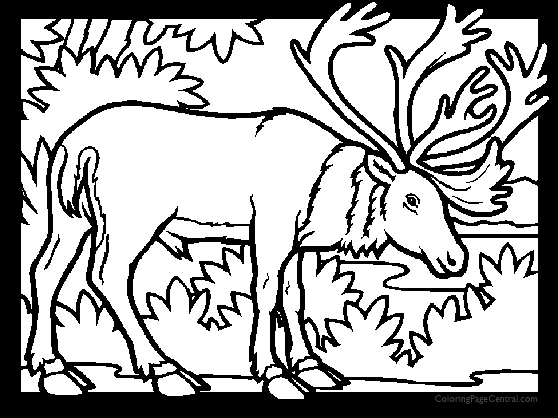caribou 01 coloring page coloring page central