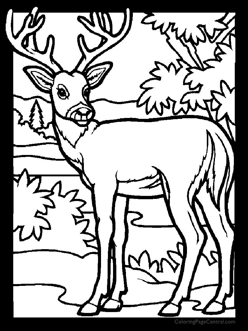 Deer 02 Coloring Page