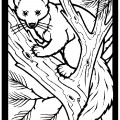 Pine Marten 01 Coloring Page