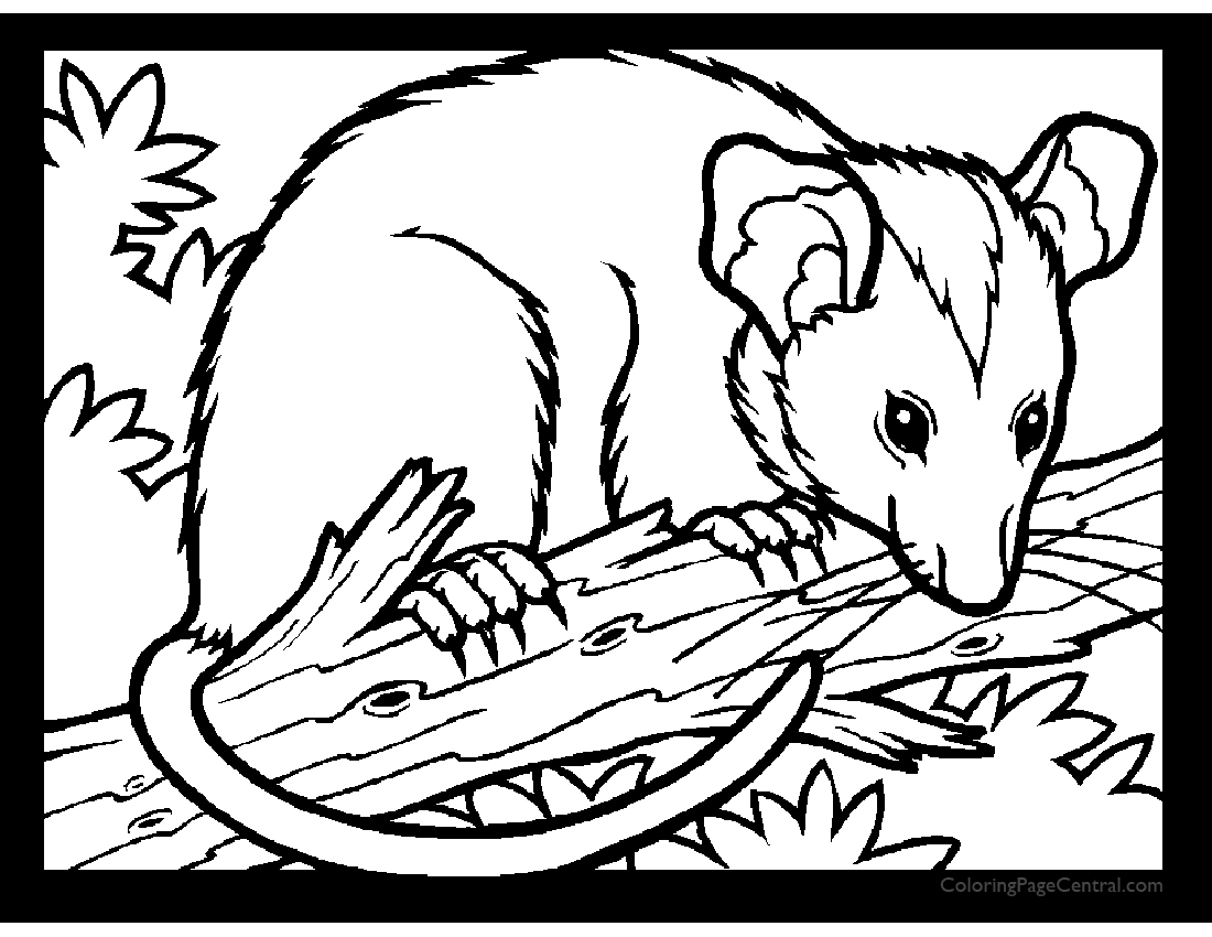 Possum 01 Coloring Page Coloring Page Central