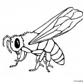 Bee 01 Coloring Page