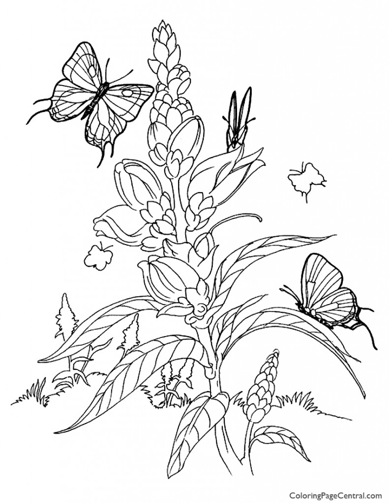 Butterflies 01 Coloring Page