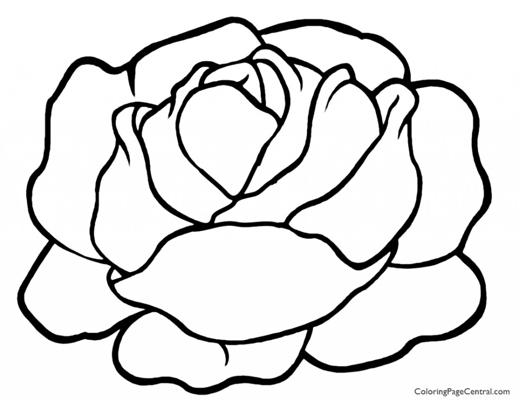 Lettuce 01 Coloring Page