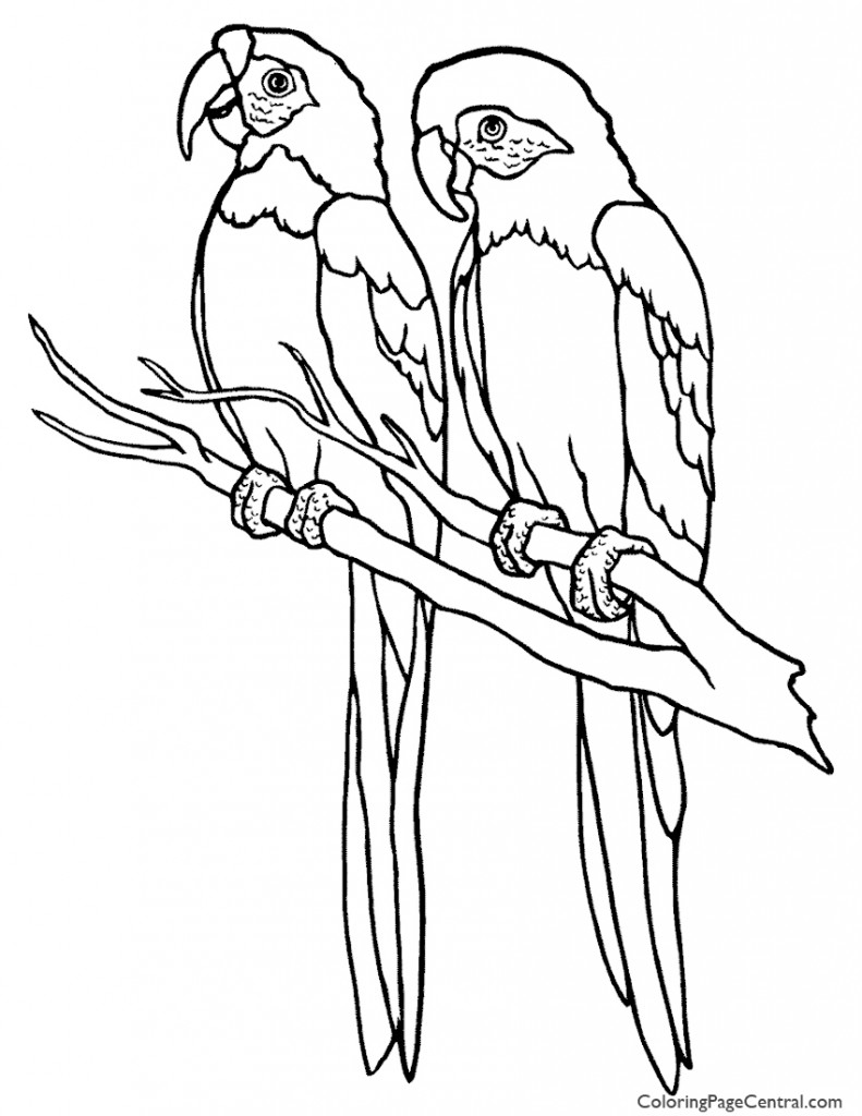 Parrot 01 Coloring Page