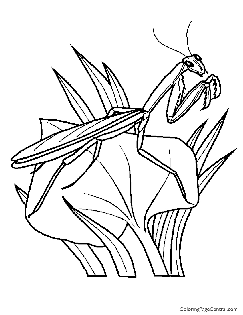 Praying Mantis 01 Coloring Page | Coloring Page Central