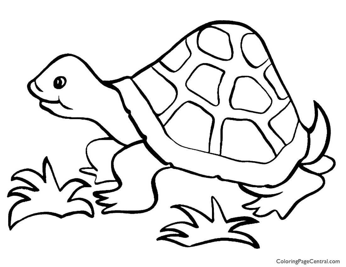 Tortoise 01 Coloring Page Coloring Page Central